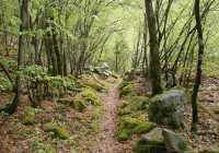 Paranesti forest
