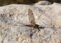fly fishing Greece