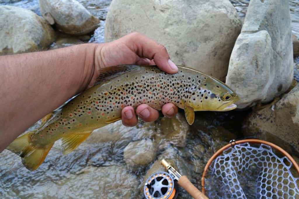 fly fishing greece – a greek adventure, Fly Fishing Bait
