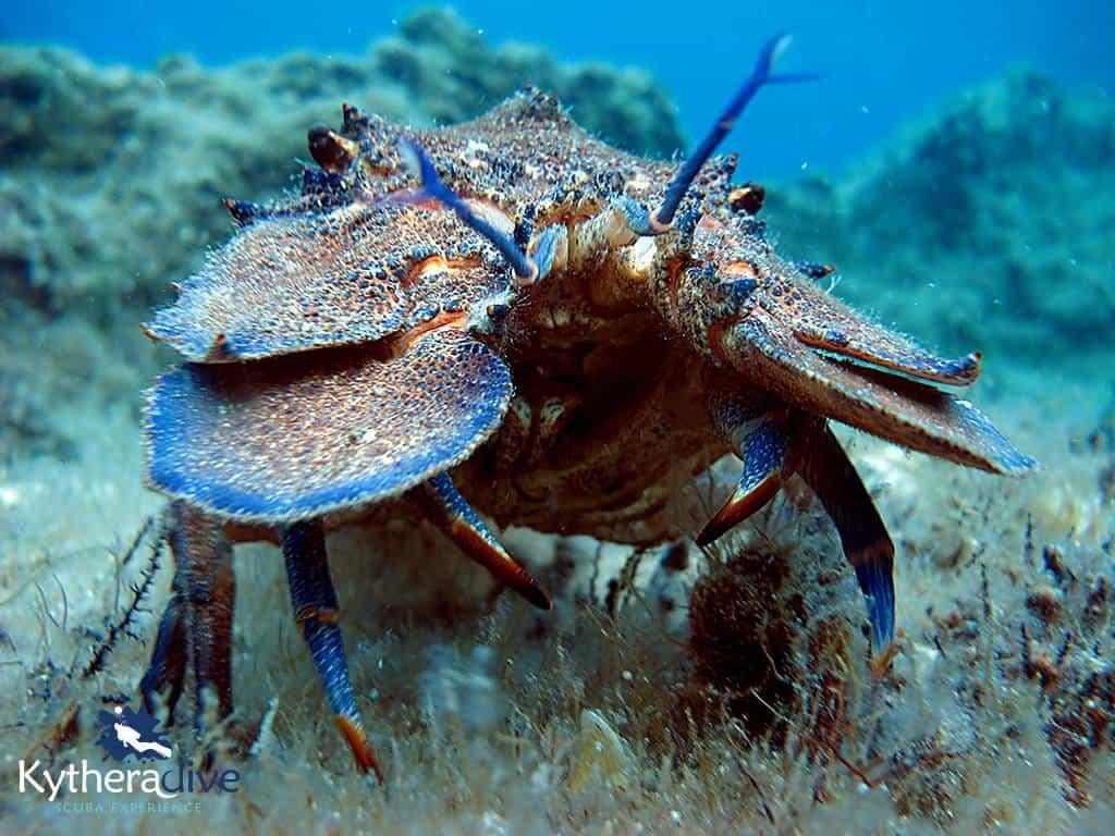 scuba diving kythera