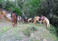 Horse Trekking in the Land of the Wolf