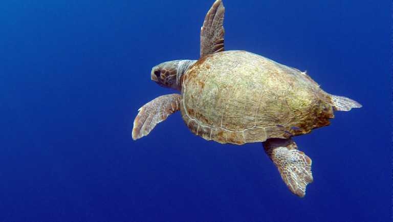 Scuba Diving Folegandros