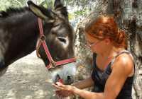 Donkey Trekking Kefalonia