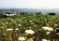 Exclusive Manousakis Winery and Vineyard Tour