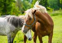 Horses Greece