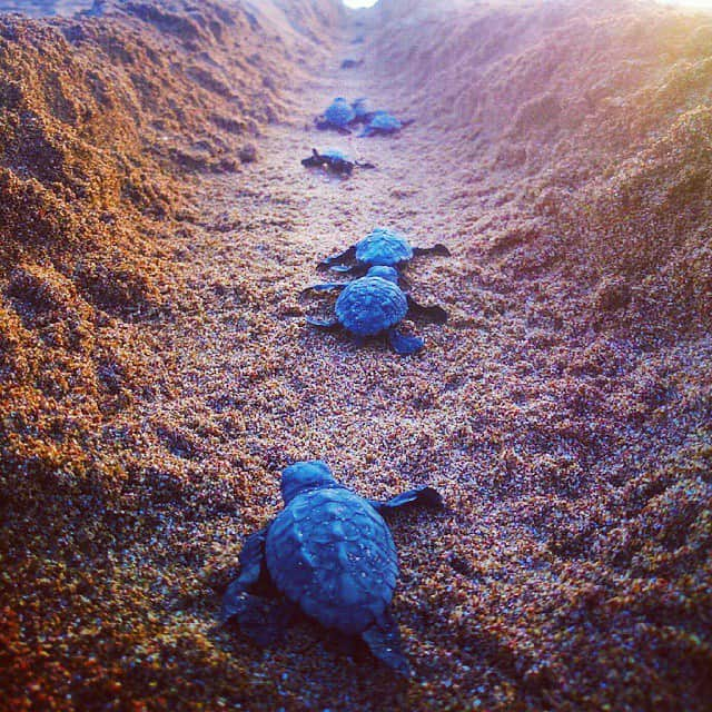 Turtles Greece