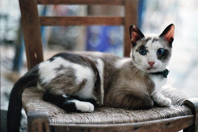 Blue Eyed Cat, Crete
