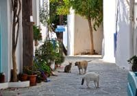 Island Blue streets
