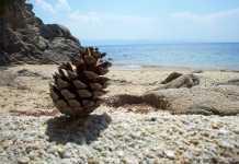Skathos Greece