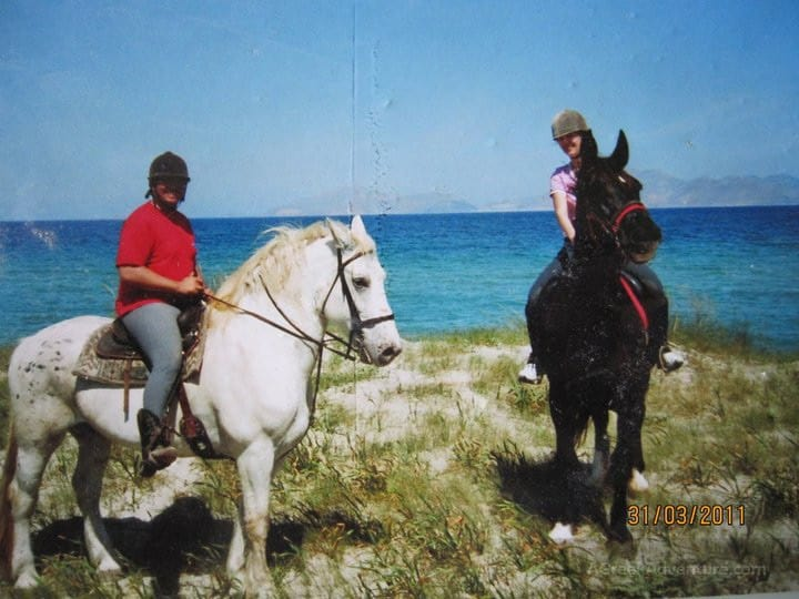 Horse Breeds For Heavy Riders