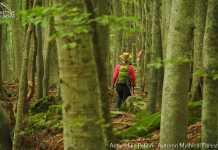 ActiveHike Pelion Autumn Mythical Forests 28-30.10.2016