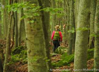 ActiveHike Pelion Autumn Mythical Forests 28-30.10.2016