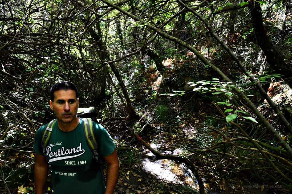 Hiking Luscious Vlachokerasia Forest in Peloponnese