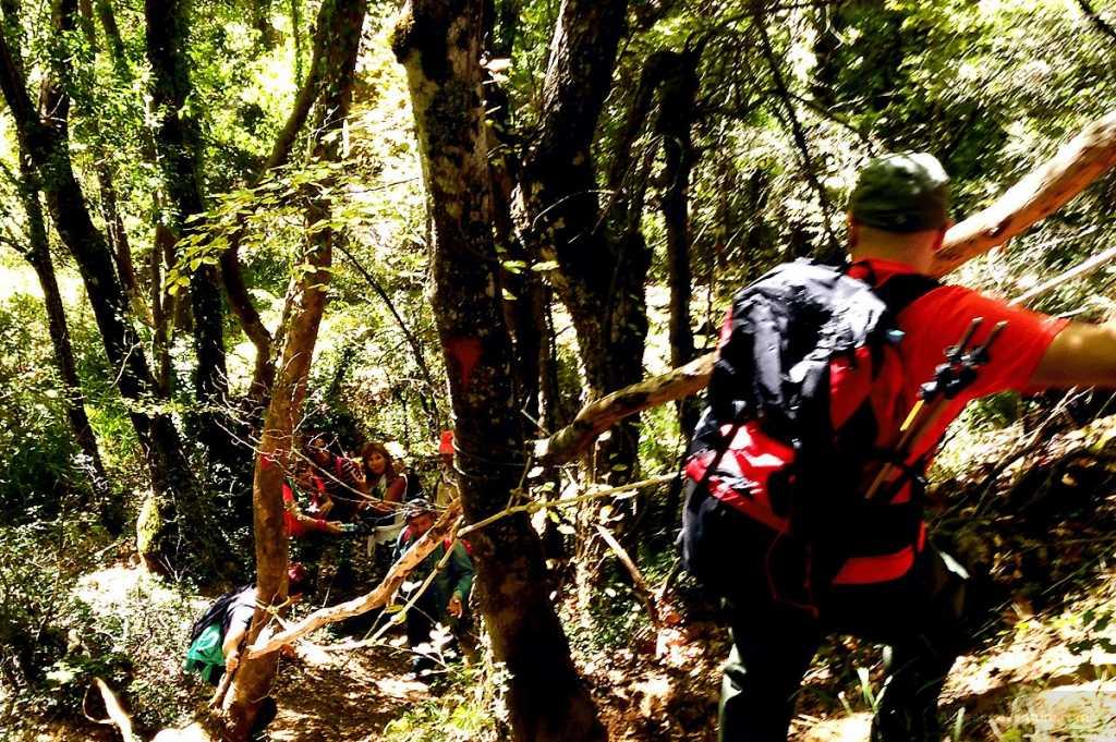 Hiking Luscious Vlachokerasia Forest in Peloponnese