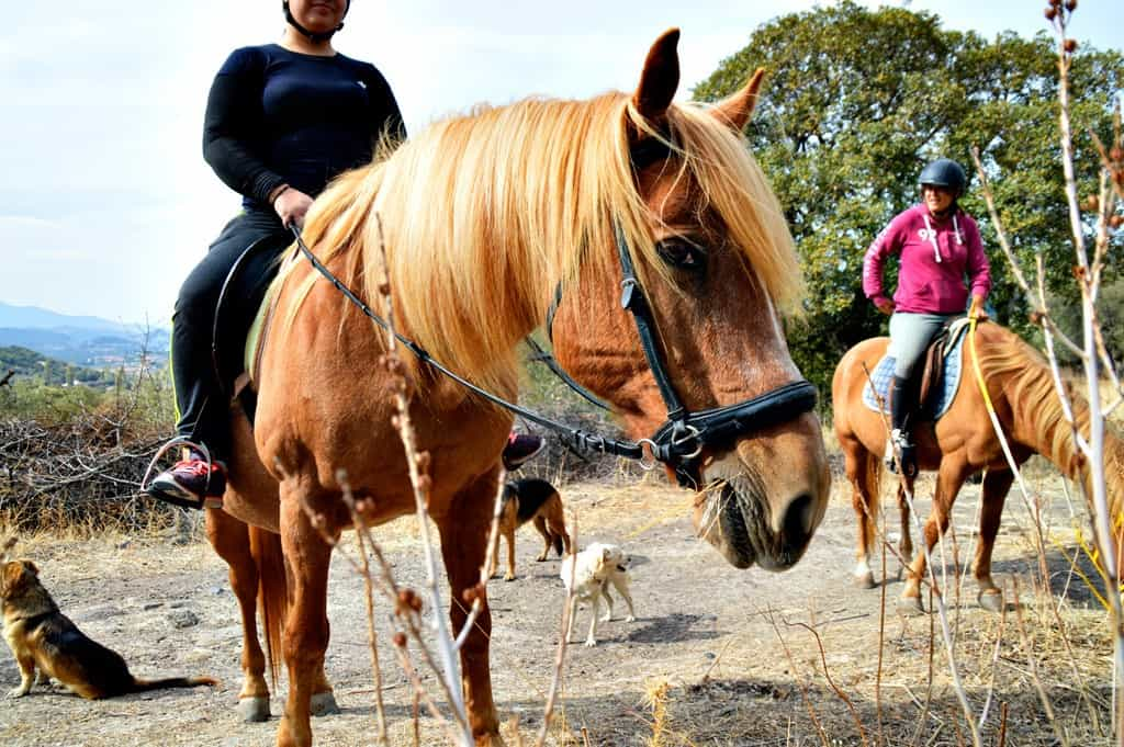 Lesvos HorseBack Riding and Hiking