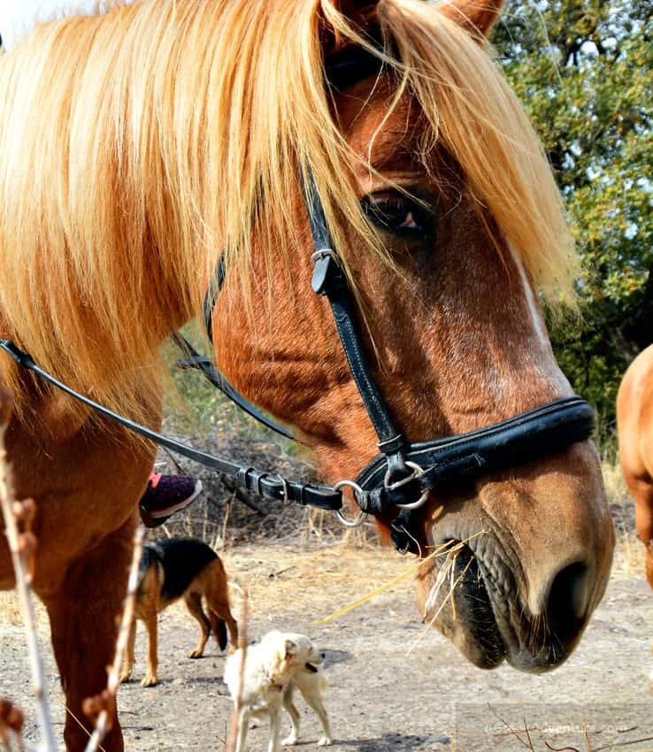 Lesvos HorseBack Riding and Hiking - Things To Do in Lesvos Greece