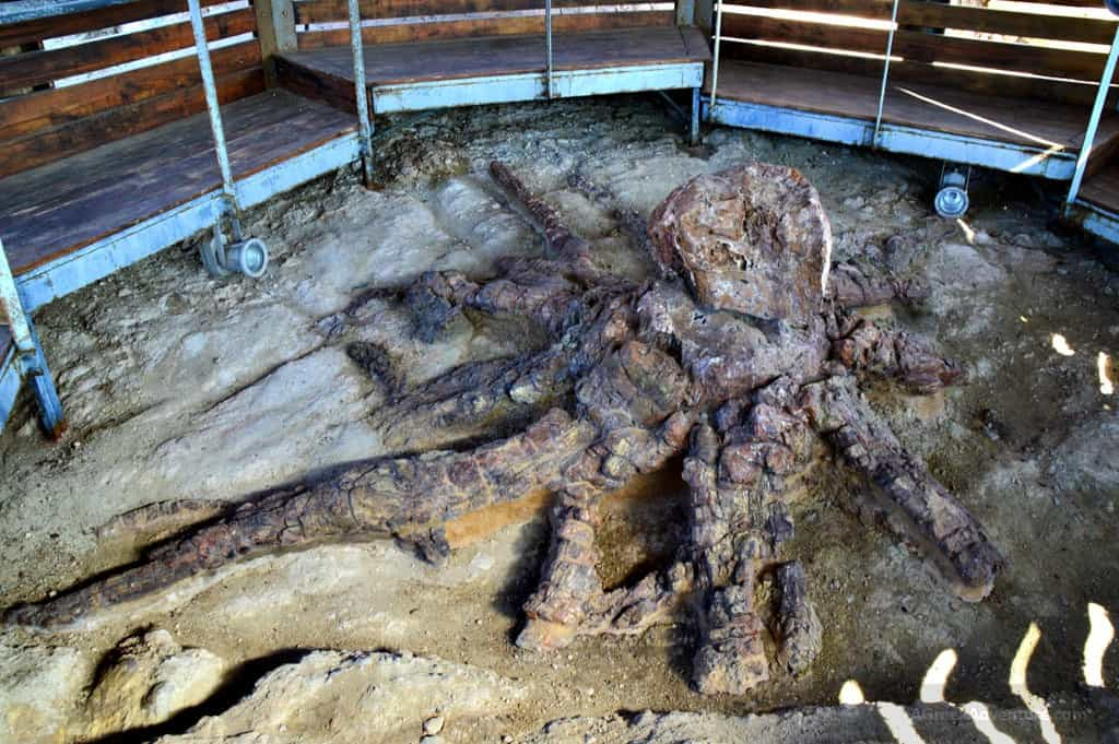 Ancient Petrified Forest of Lesvos and Natural History Museum