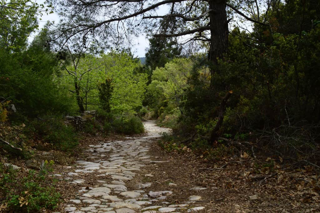 Hiking through the Chestnut Forest of Agiassos - Things To Do in Lesvos Greece