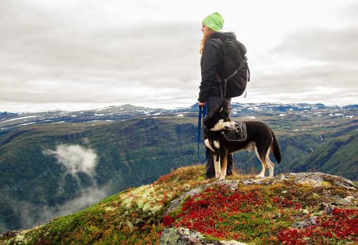 Hiking With Dogs Essential Guide