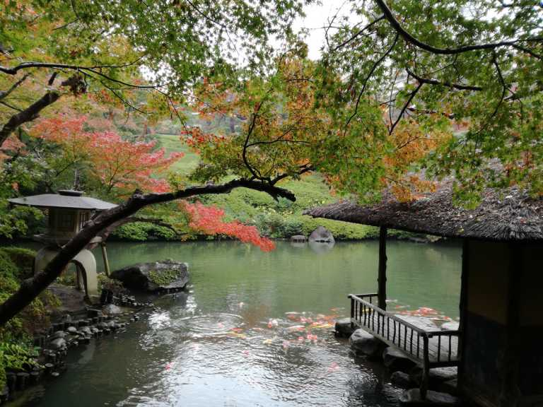 Things to do in 1 Day in Tokyo