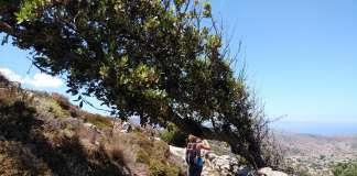 How to Tame Seasonal Allergies While Hiking