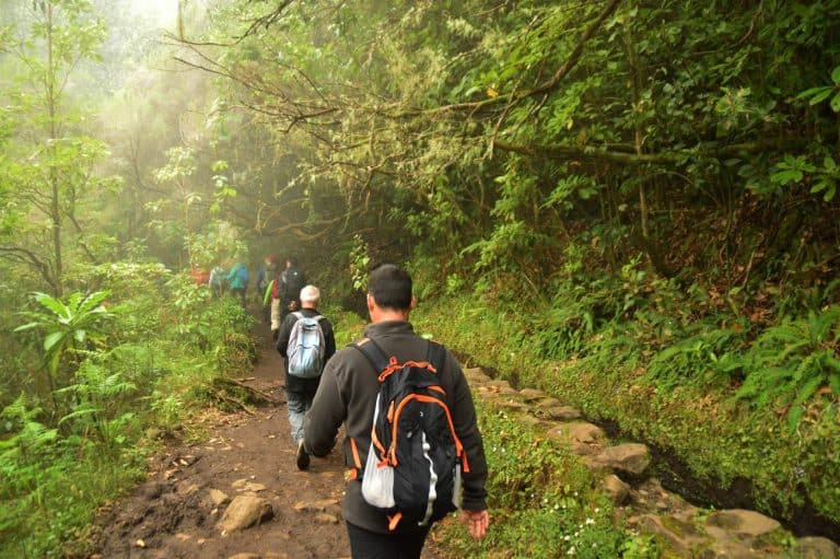 Best Levadas in Madeira Tropical Hiking Experiences 2021 1