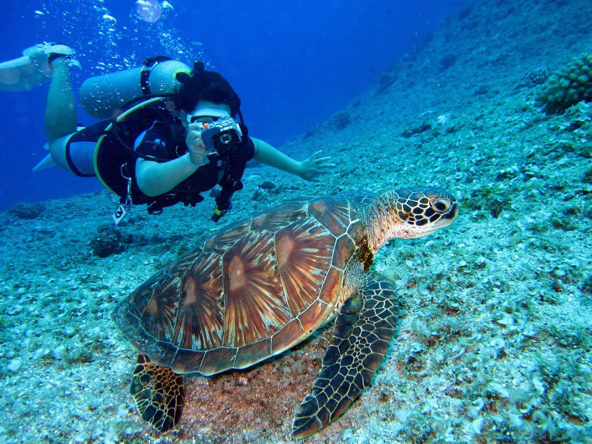 Aquatic Animal Coral Diver