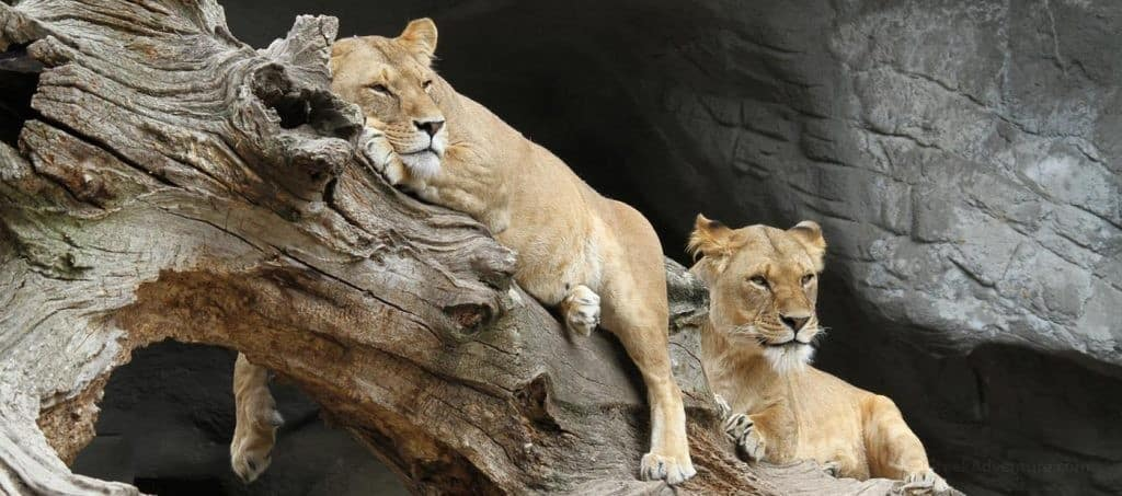 Which one is The Best African Safari in the World