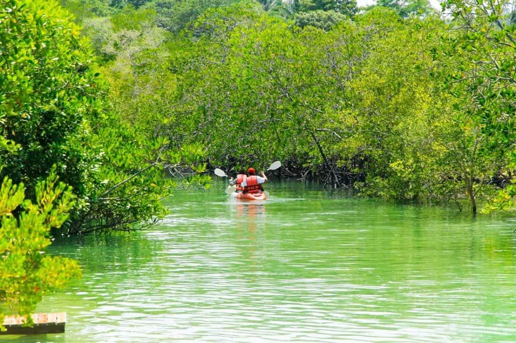 Best Ideas for Kayaking Florida Keys