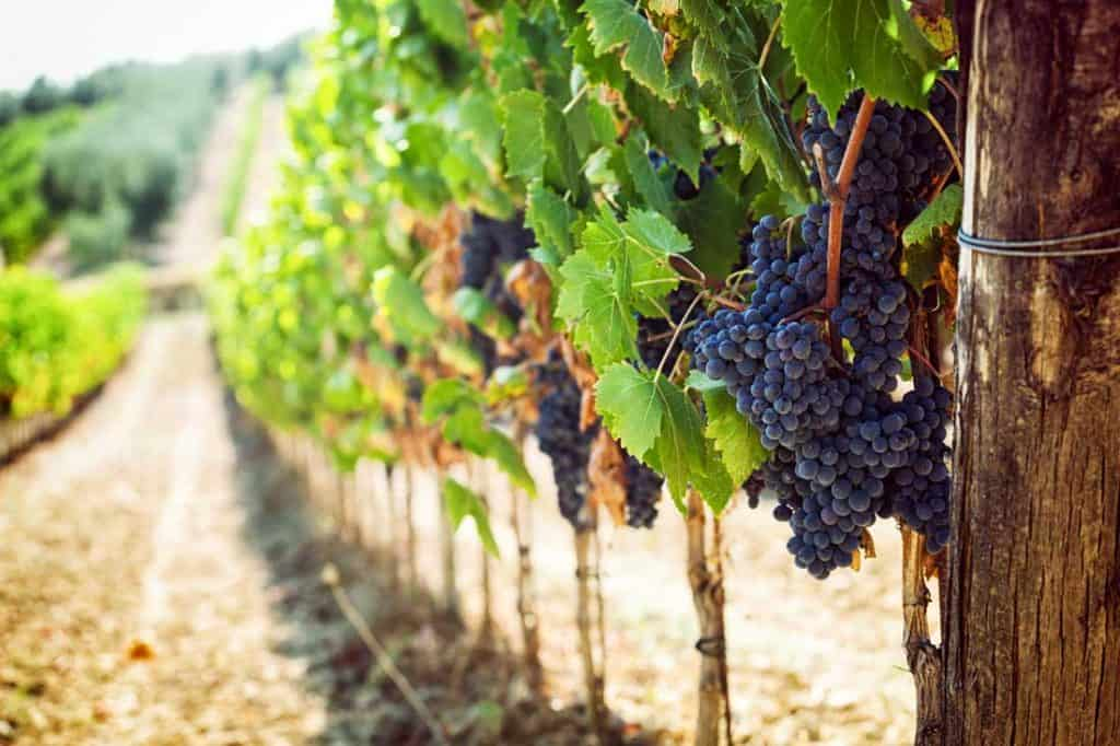 Best Wine Tours In The US