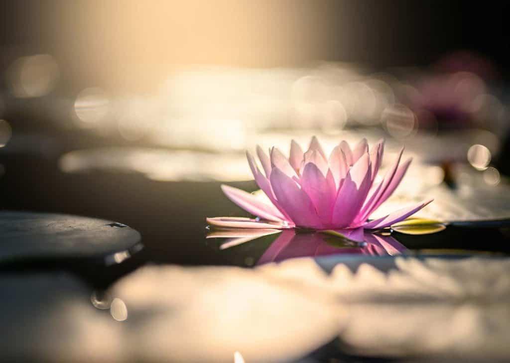 Zazen Sesshin Meditation Best Valuable Lessons