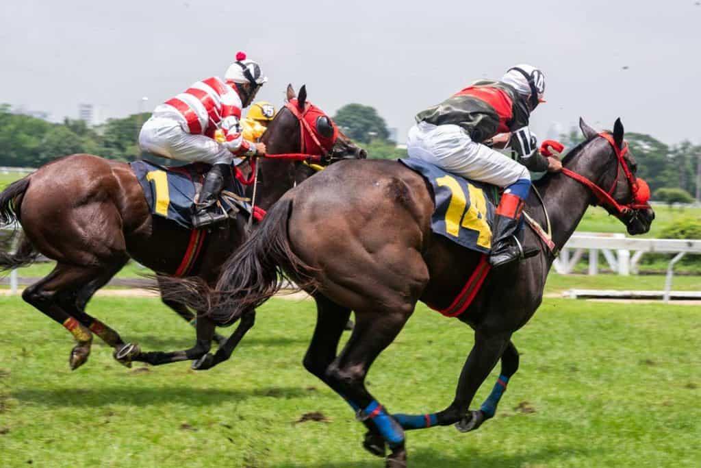 Cheltenham Horse Racing Festival  for Female Sports Fans